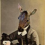 zebra-head